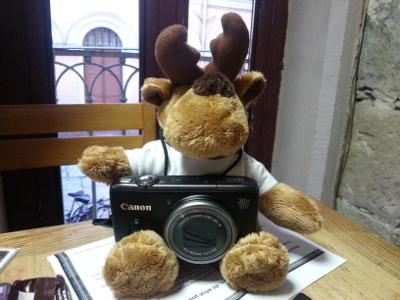 L'élan s'apprète à prendre des photos.